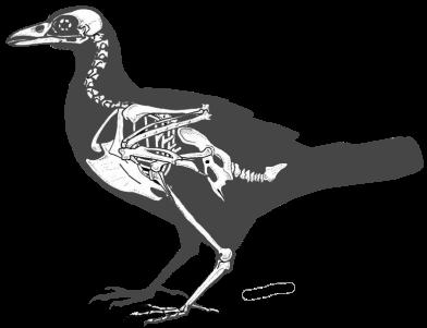 crow-copy